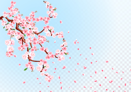 Sakura. Branches with pastel flowers, leaves and cherry buds. Cherry Petals. Transparent Background illustration