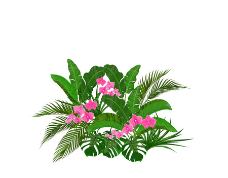 Set, bouquet. Green tropical leaves of banana, coconut, monstera and ogawa. Pink Orchid.  illustration