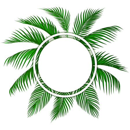 Green tropical palm leaves. Place for advertising, announcements.  illustration