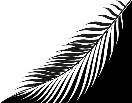 Black and white stylized drawing of a tropical palm leaf. . illustration