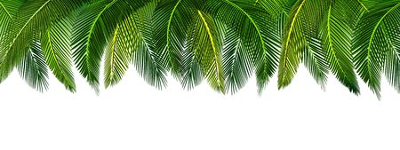 Dense thickets of tropical green palm leaves on top of the picture. Place for advertisement, announcement. Vector illustration