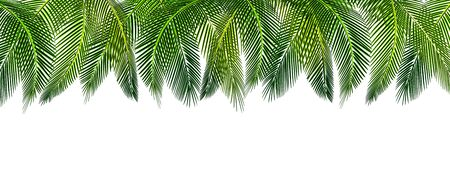 Tropical Various shapes of green palm leaves on top of a picture. Place for advertisement, announcement. Vector illustration Ilustração