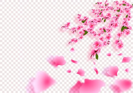 Sakura is gorgeous. Cherry branches with delicate flowers, leaves and buds in perspective with shadow. On a transparent background. illustration