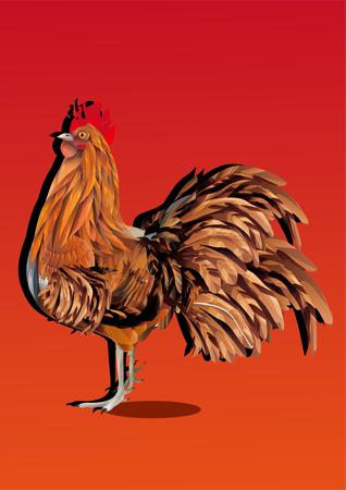 The cock Çizim