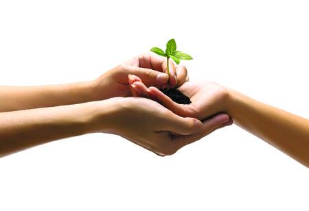 Handen houden van plant geïsoleerd op wit