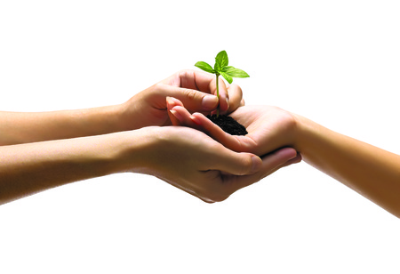 Hands holding plant  isolated  on white  photo