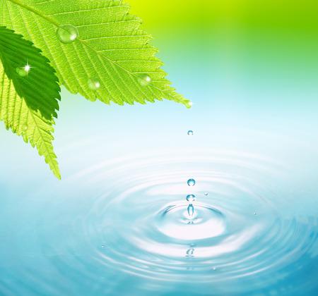葉の上の水滴 写真素材