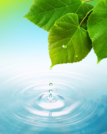 rejuvenate: Drop of water from leaf Stock Photo