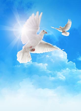 palomas volando: Palomas blancas en el cielo azul