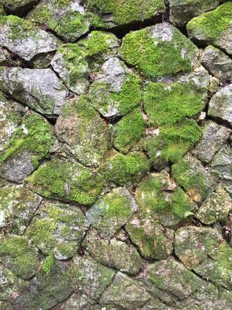 moss: Moss stone wall Stock Photo