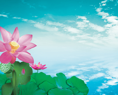 Lotus flower on blue sky background Stock Photo - 44637844