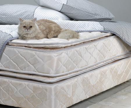 Chat sur lit de repos