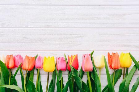 Vue de dessus sur les tulipes de couleur d'affilée sur un tableau blanc