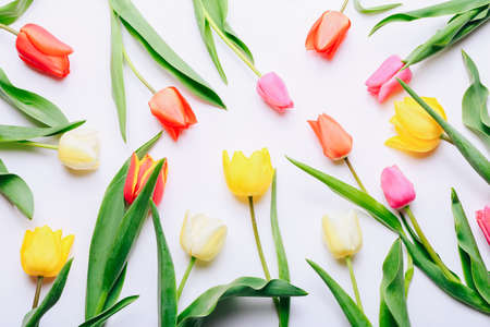Beautiful tulips lying on white background, top view Stockfoto