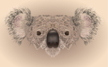 Illustartion of koala bear face in realistic maner