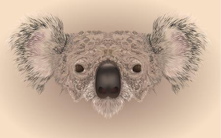 phlegmatic: Illustartion of koala bear face in realistic maner