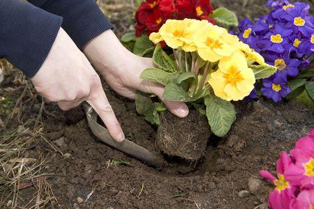 Garden Work in the springs. photo