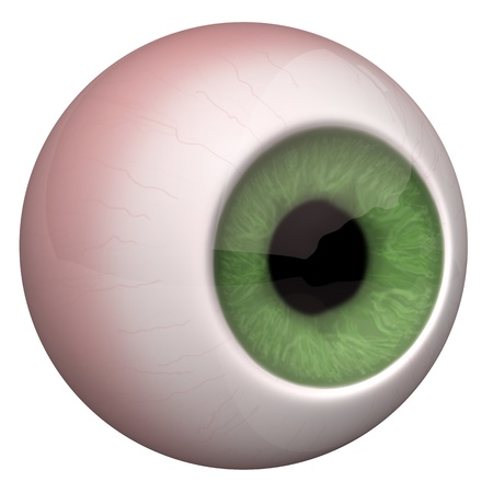 fundus: 3d illustration of the eye on the white background