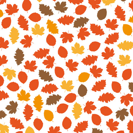 acer: Foliage in autumn colors on white background. Eps 10 vector file.