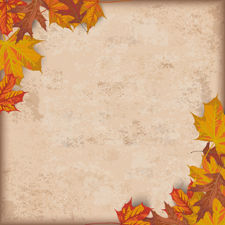 acer: Autumn vintage background with foliage.