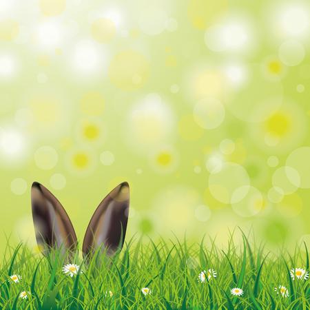 Weiße Blumen im Gras mit Hasenohren auf dem Bokeh Hintergrund. Standard-Bild - 52893231