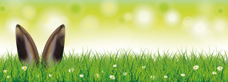 ears: White flowers in grass with hare ears on the bokeh background. Eps 10 vector file.
