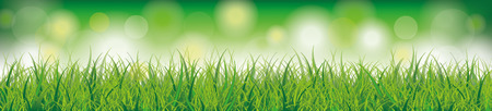 green grass: Green grass with bokeh lights on the green background. Illustration
