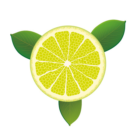 limon: Citrus fruit with foliage on the white background. vector file.