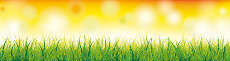 sunshine background: Green grass with bokeh lights on the yellow background. vector file.