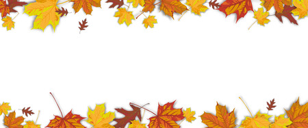 Autumn foliage on the dark wooden background.  vector file.