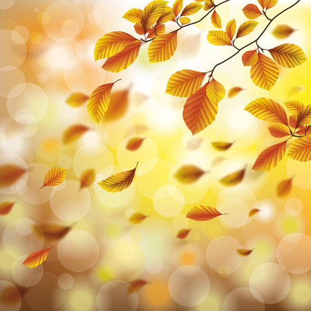 Autumn flyer design with beech tree foliage and sunlights. Eps 10 vector file.