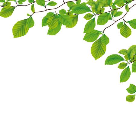 ブナの木の紅葉と春のチラシ デザイン。Eps 10 ベクトル ファイル。