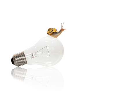 Grove snail on the bulb and white background.