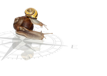 Two snails with compass on the white background.