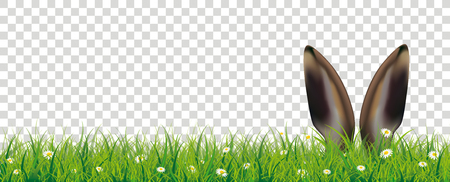 White flowers in grass with hare ears on the checked background. Eps 10 vector file.