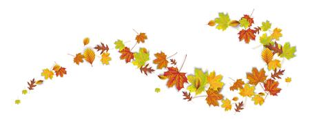 Autumn foliage on the white background. Eps 10 vector file.