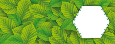 Eco banner with white emblem and green beech leaves. Eps 10 vector file. Ilustração