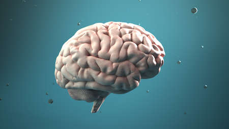 Human brain on the green background. 3d illustration. Archivio Fotografico