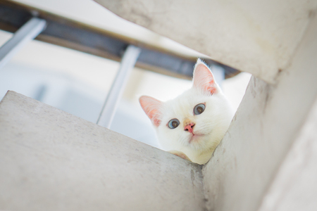 purr: Cute white cat staring from upstair Stock Photo