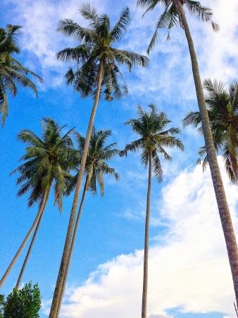 pulau: Balik Pulau  Penang  malaysia