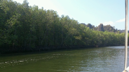 river bank: Trees lining along the river bank