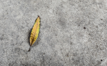 rainless: Yellow leaf lies on dry concrete