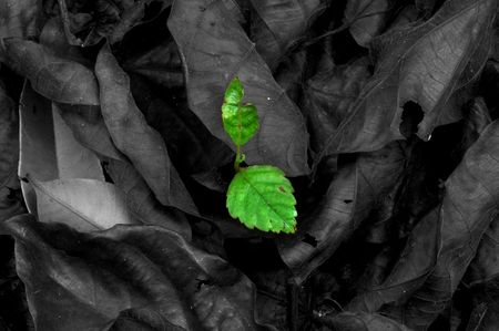 surviving: Last Surviving Leaf
