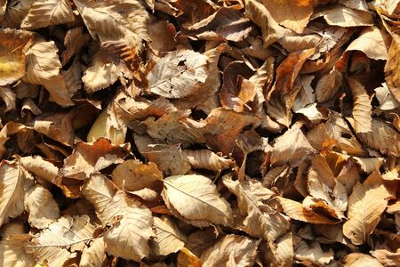 seasonal filled frame close up background wallpaper autumn shot of a big pile of soft orange yellow dry leaves on the ground