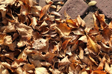 seasonal filled frame close up background wallpaper autumn shot of a big pile of soft orange yellow dry leaves lying on an old red brick ground Stockfoto