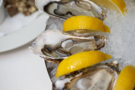 detailed macro close up top view food shot of delicious fresh shucked open oysters lying between lemon slices on a round cold ice tray Stock Photo