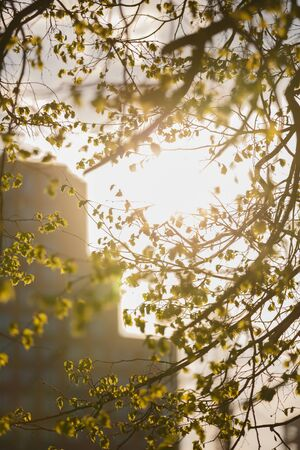 Beautiful romantic dreamy vertical spring day shot of branches of a tree with small green leaves and the yellow orange sunlight shining through, creating a blurry look mood