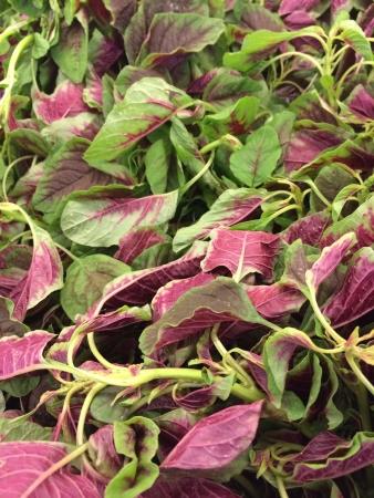 amaranth: Red amaranth vegetable