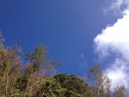 chilling out: Chilling out @ Qingjing con el cielo azul �rbol
