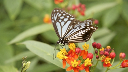 Beautiful butterfly gathering pollens